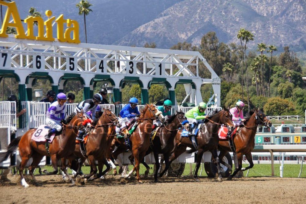 Horse Race Betting 101